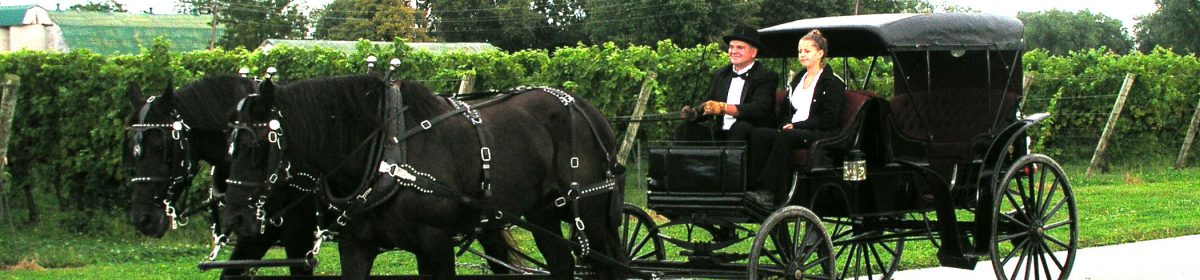 Murdo's Getaway Horse and Carriage Service